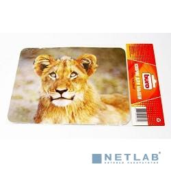 Ноутбук Asus VivoBook Pro 17 N705UD [N705UD-GC137T]